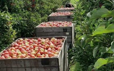 Appels en Peren assortiment compleet